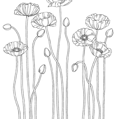 Perfect poppies rubber stamps stampin up