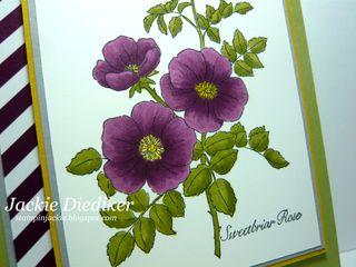 Sweetbriar Rose Close Up