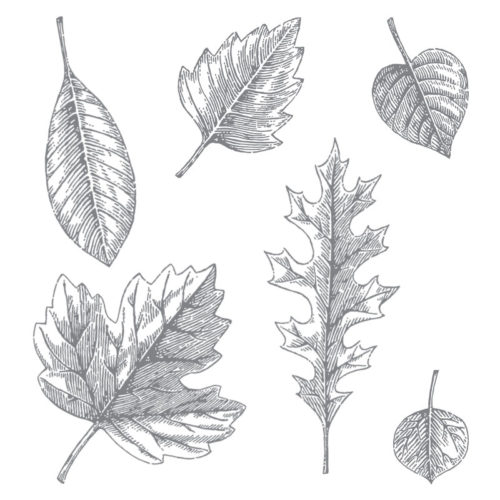 Vintage Leaves Stamp Set - Images © Stampin' Up!